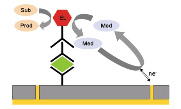 le procedure e i protocolli di laboratorio per la luminescenza